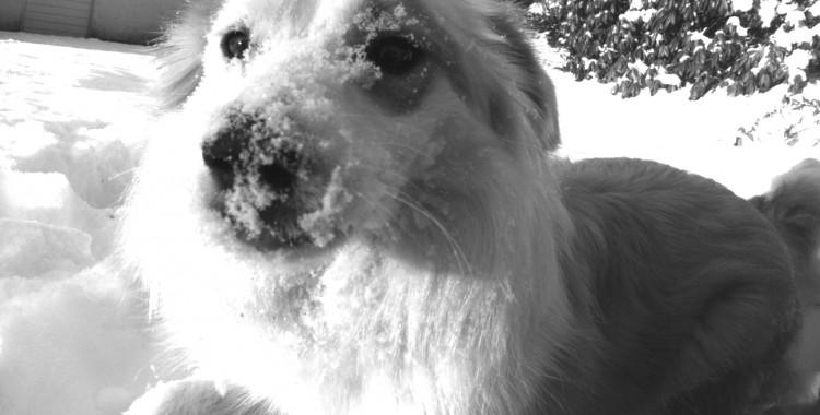 Page a vite retrouvé le plaisir de jouer dans la neige